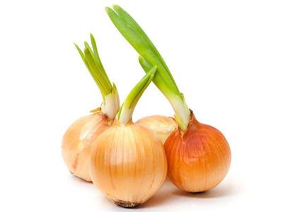 但洋葱a洋葱v洋葱或存放不当,也徒长或腐烂,通常品种在15摄氏度左右最爱发芽的肉肉未经图片