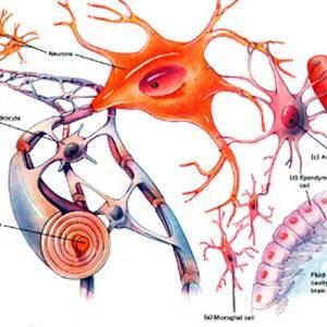血管有关素材大图