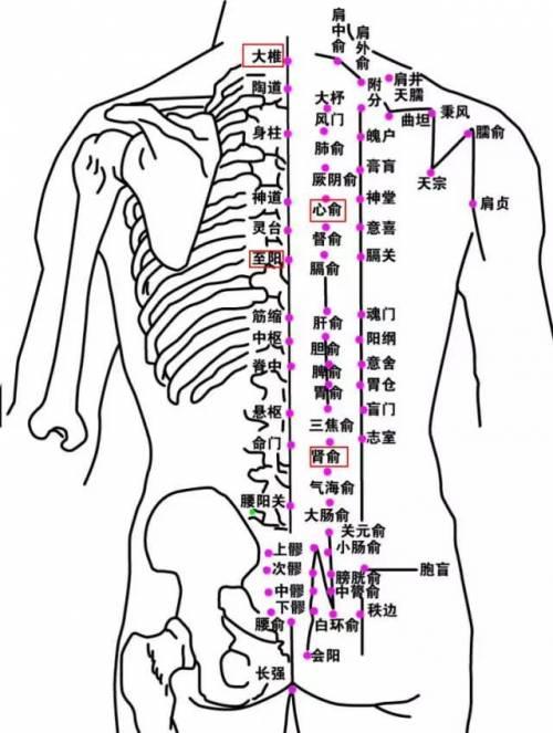 大椎血是人体哪个位置_艾灸取穴:督脉:大椎,至阳,肾俞,心俞
