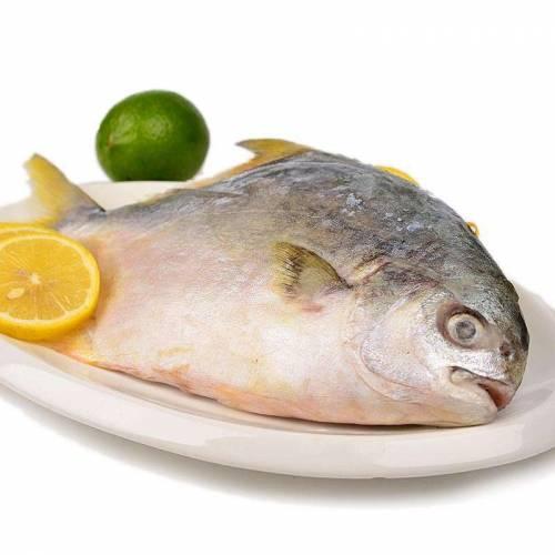 海鱼的种类图片常吃