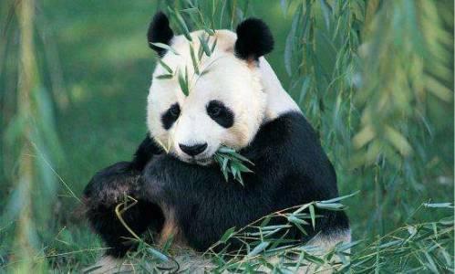 """萌宝熊猫眼周""""黑眼圈变白"""", 还会人见人爱吗?"""