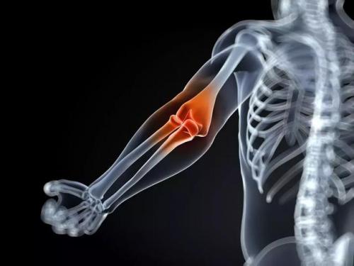 手臂关节结构图片大全