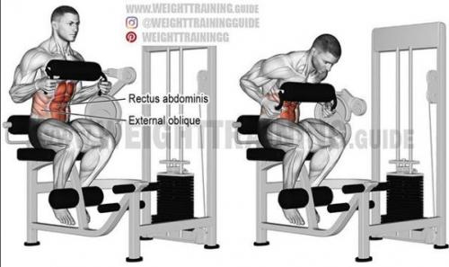 超全肌肉训练图解,告别瞎练从此健身不求人!