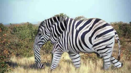 转基因动物的新纪元