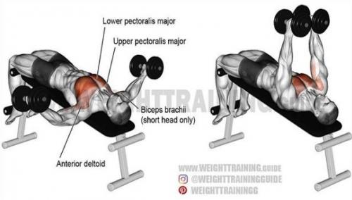 都是各个肌肉肌肉v肌肉的细节教程简单部位实用胸部龙门易懂架夹胸是什么oc情趣用品系列图片