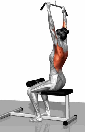 俯身杠铃双臂划船目标肌:背部肌群