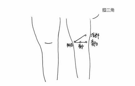 手背肌腱结构图