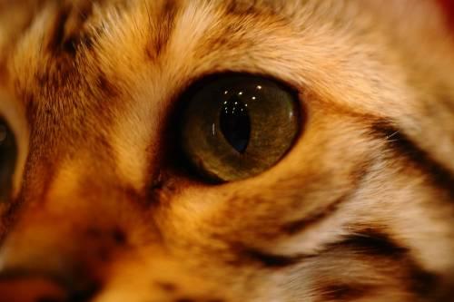 像猫眼一样的红斑是什么?
