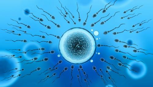 生育能力好的男人,精子都有这4个共性,老婆也可以了解
