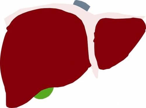 human-liver-3746042_640.jpeg